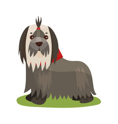 Yorkshire terrier dog purebred pet animal vector