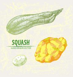 Digital detailed line art color squash vector