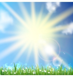 Daisy field and sunset sky vector