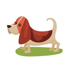 Basset haund dog purebred pet animal standing on vector