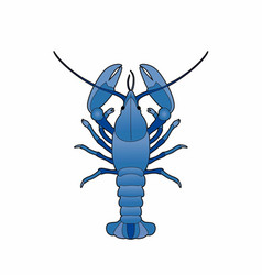 Blue lobster vector