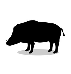 Boar wildlife black silhouette animal vector