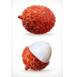 Lychee icon vector