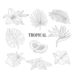 Tropical Fruits And Plants Assortment Hand Drawn vector image