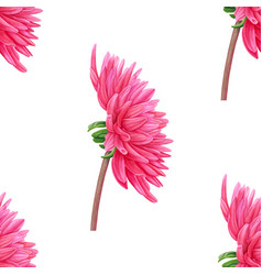 watercolor pink dahlia seamless pattern vector image vector image