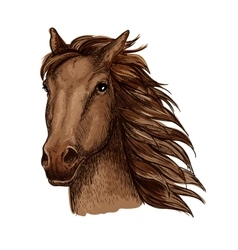Brown racehorse sketch for horse racing design vector
