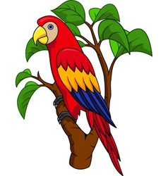 Funnny Parrot vector image