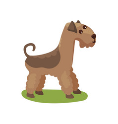Airedale dog purebred pet animal standing on vector