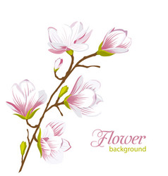 Beautiful magnolia branch exotic flowers vector