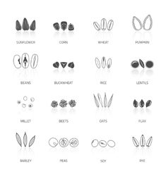 Seed Icon Set vector image