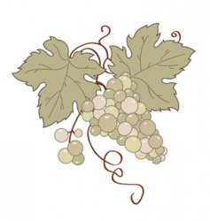 Wild grape vector