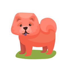 chow chow dog purebred pet animal standing on vector image