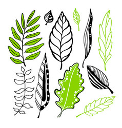 leaves collection for design decoration vector image