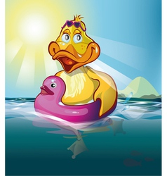 duck swim vector image