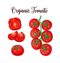 Tomato sliced set vector