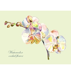 ornate watercolor orchid flower vector image