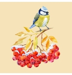 Titmouse bird and ashberry vector image