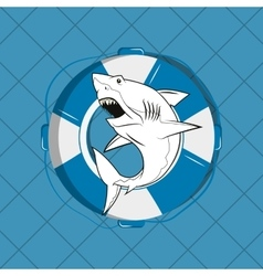 Shark emblem image vector