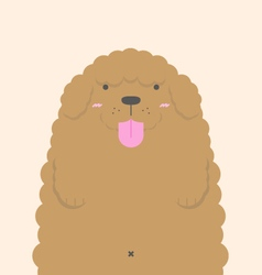Cute big fat brown poodle dog vector