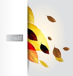 Autumn leaves design vector image