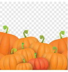autumn orange pumpkins border design vector image