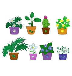 Cartoon flowers in pots vector