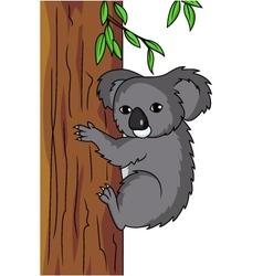 cute koala vector image vector image