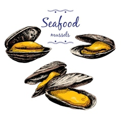 Seafood mussels vector