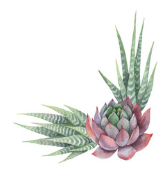 Watercolor bouquet of cacti and succulent vector