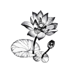 Water lily flowers on pond black and white vector