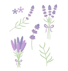 Lavender flat set vector
