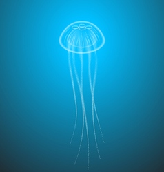 Marine life jellyfish with tentacles transparent vector