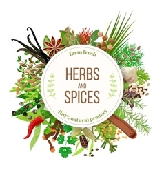Culinary herbs and spices big set vector