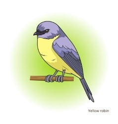 Yellow robin bird educational game vector