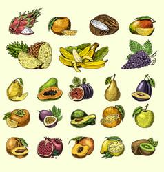 Set of hand drawn engraved fresh fruits vector