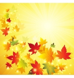 Autumn maple leaves background vector image vector image