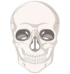 Cracked marks on human skull vector image vector image