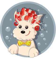 Funny dog with hair rollers pet salon carto vector