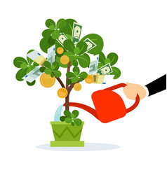 money tree care vector image