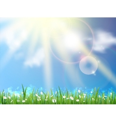 Field of daisies and perfect sky vector image