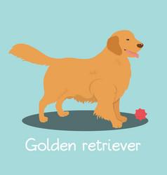 An depicting golden retriever dog cartoon vector