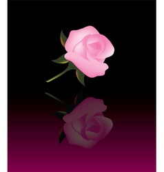 abstract background with pink rose vector image vector image