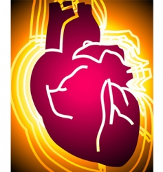 heart vector image vector image