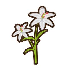 Cartoon crocus flower petal leaf vector