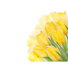 Fresh spring tulip flowers on white eps 10 vector