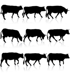Collection black silhouettes of cow vector