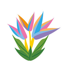 Bird of paradise flower spring vector