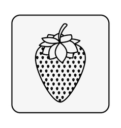 Monochrome contour square with strawberry fruit vector