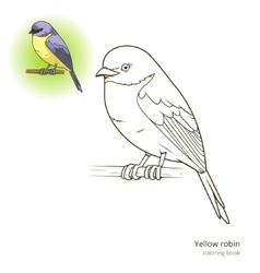 Yellow robin bird coloring book vector