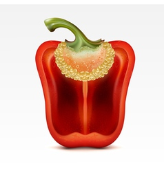 red pepper vector image vector image